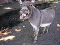 Paul,The Donkey