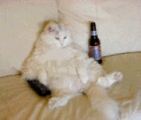 CatDevilAlcohol
