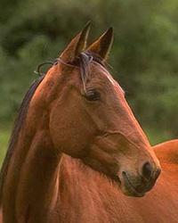 Kůň - Dažbogovo zvíře
